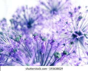 Fine violet flowers