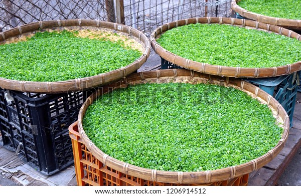 Finely chopped shallots or chives dry in the sun