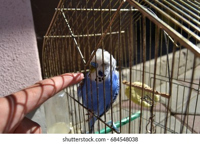 A Finger and A Blue Budgie