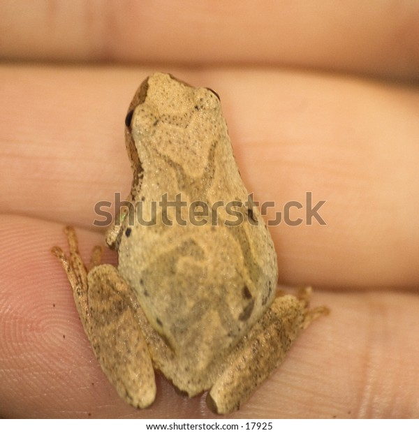 a finger-sized frog, on someone's hand