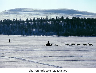 Finland, snowmobile and reindeer in silhouette