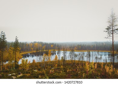 Finnish autumn forest and its colors