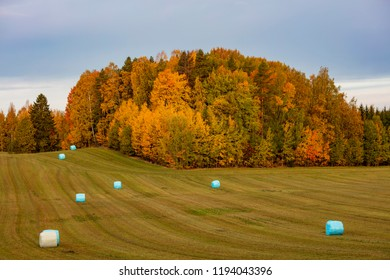 Finnish colorful autumn field landscape. There are plastic packed hay bales.