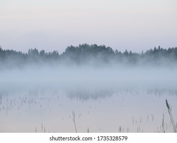 Finnish forest in its natural state