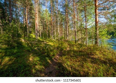 Finnish forest at sunny summer day