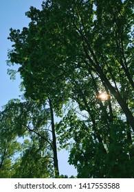 Finnish green summer forest in Finland