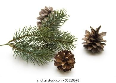 Fir branch with fir cones