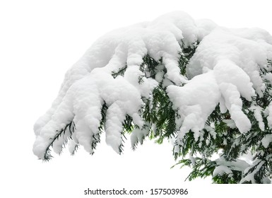 Fir branch heavily covered with fresh snow on pure white background
