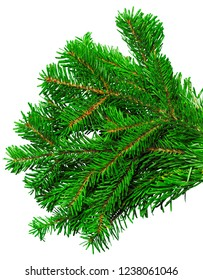 Fir branch isolated on white background - Shutterstock ID 1238061046