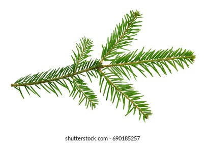Fir branch, isolated without a shadow. Christmas decor. Nature in details. Healing tree. Close-up.