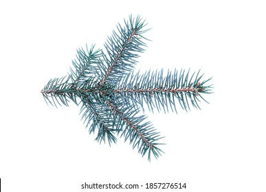 Fir branch of a silver fir isolated on a white background - Shutterstock ID 1857276514