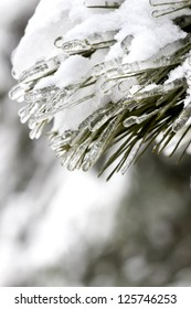 Fir branch under heavy snow and ice