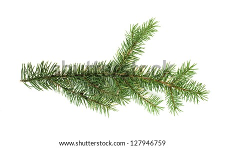 Fir branch white isolated. Studio shot