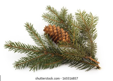 Fir branches with cone isolated on white