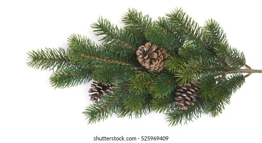 Fir branches with cones on a white background