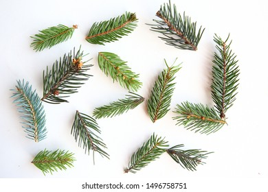 Fir branches on white background as a texture.