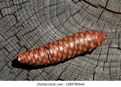 fir cone laying on wood