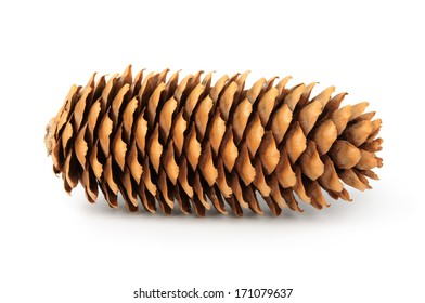 Fir cone on white background