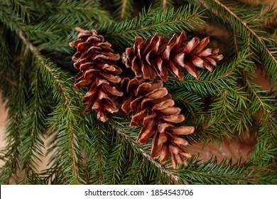 Fir cones on a fir-tree before making Christmas wreath.