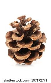 Fir cones taken closeup isolated on white background