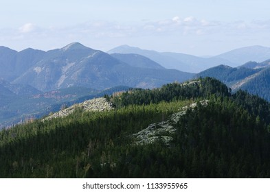 Fir forest on the slope of the mountains. Landscape with a view of the mountain ranges