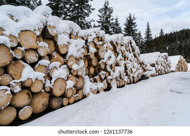 fir logs cut and stacked on the edge of a forest in winter in the Trentino Alto Adige region, Italy