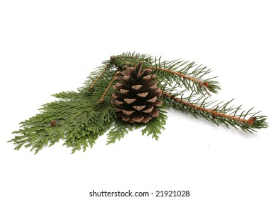 fir and pine isolated on white