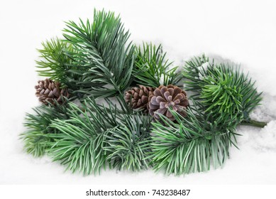 Fir spruce branch with fir apples on the white snow background in winter forest