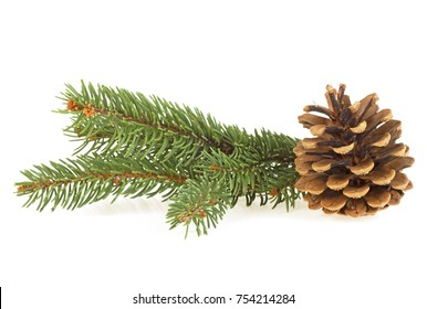 Fir tree branch with cone isolated on white background