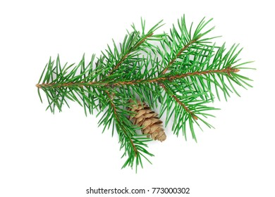 Fir tree branch with cone isolated on a white background close-up. Top view