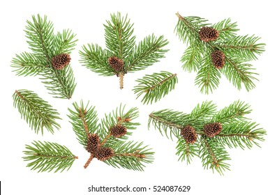 Fir tree branch with cones isolated on white background with clipping path