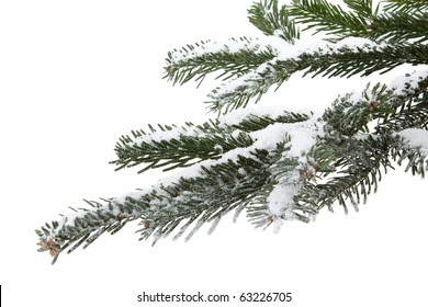 Fir tree branch  with fresh snow  on a white background. Christmas decoration.