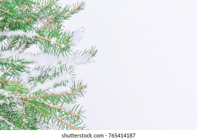 Fir tree branch with fresh snow.  Fir branch on the background of natural snow.