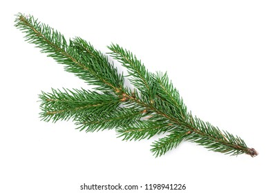 Fir tree branch isolated. Nature Symbol of Christmas and New Year on white background.