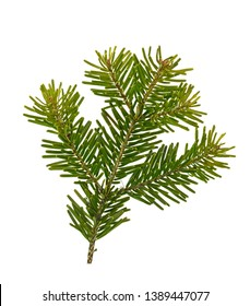 Fir tree branch isolated on white background. Pine branch. Christmas background. Twig of Christmas tree, element for decoration of Christmas decor branch of green spruce. Pine branch isolate on white