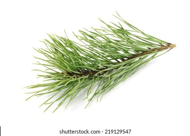 Fir tree branch on white background
