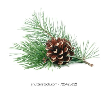 Fir tree branches with cones isolated on white background. Winter holidays decoration. Evergreen tree.
