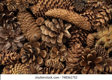 Fir tree and pine tree cones background