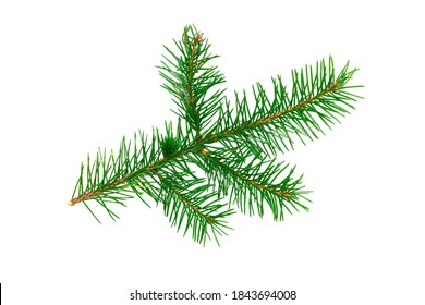 Fir tree twig. Christmas tree branch. Isolated on white background. Fresh bright green coniferous foliage. Christmas decorative element. Closeup spruce twig. Decoration object for holiday design.