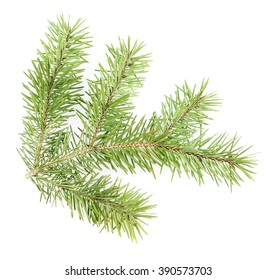 Fir tree twig isolated on white