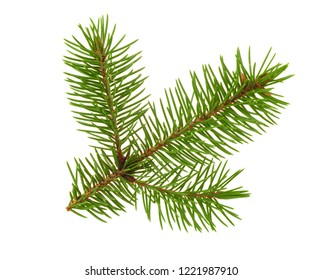 Fir tree twigh isolated on white
