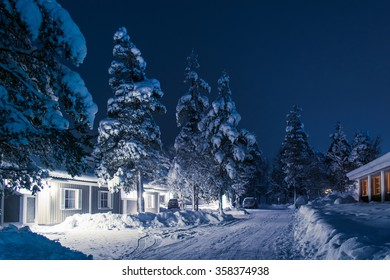 Fir trees in the cold