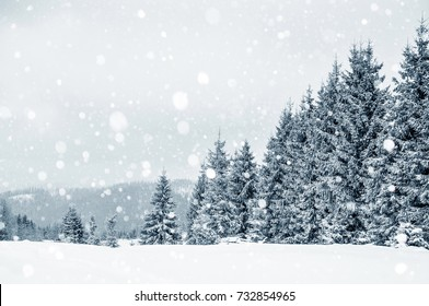 Fir trees covered with hoarfrost and snow in mountains. Christmas greetings