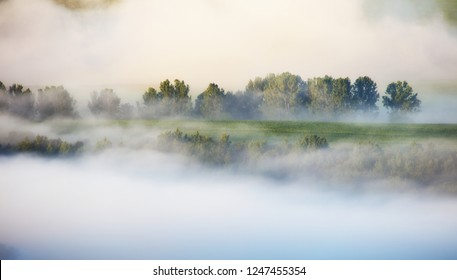 Fir trees on a meadow down the will to coniferous forest in foggy mountains of Slovakia