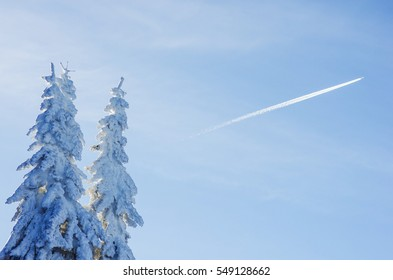 fir trees, snow, plane and clear sky