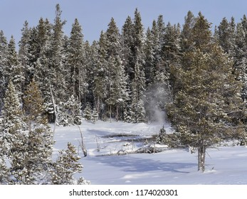 Fir trees with steam from a small thermal ventv- Yellowstone National Park, USA, in winter