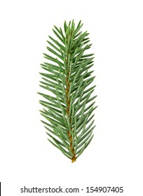 fir twig with clipping path