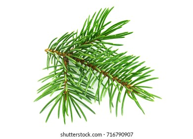 Fir Twig On White