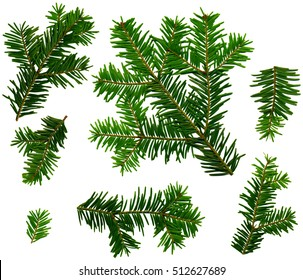Fir twigs from the top on a white background (Abies alba), is suitable for processing as a texture or pattern