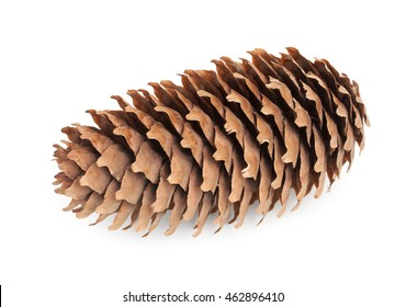 fir-cone isolated on white background close up